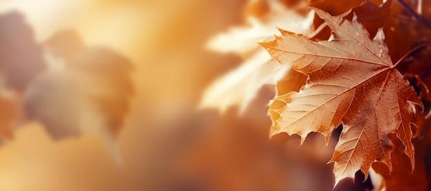 Belas folhas de outono no outono fundo vermelho ensolarado luz do dia tonalidade horizontal Foto gratuita