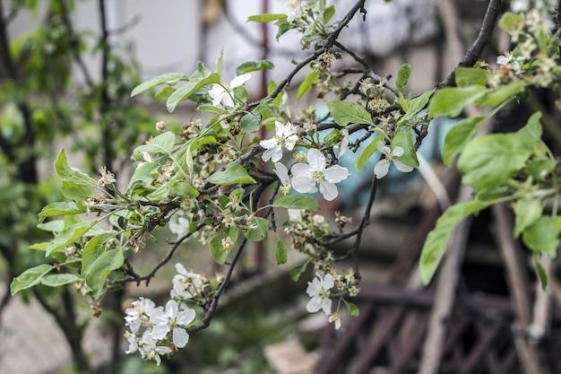 Belas macieiras florescendo no parque primavera close-up Foto Premium
