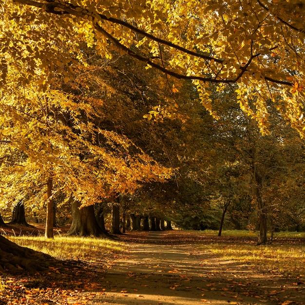 Belas paisagens de outono no parque com as folhas amarelas caídas no chão Foto gratuita