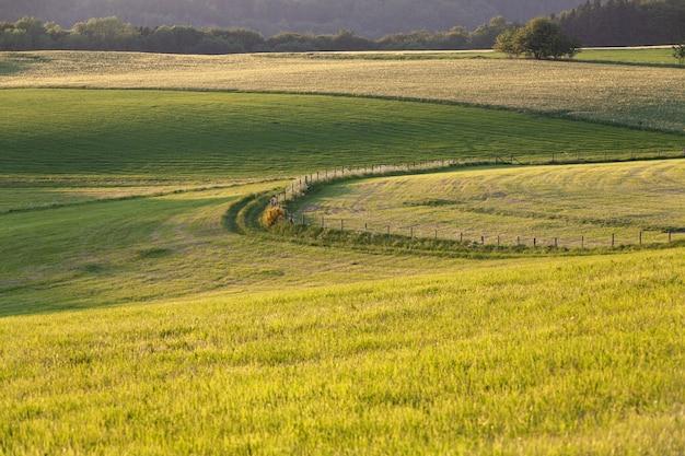 Belas paisagens de um campo verde no campo na região de eifel, alemanha Foto gratuita