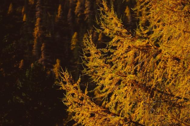Belas paisagens de uma floresta de árvores no final do outono - excelente para um fundo natural Foto gratuita