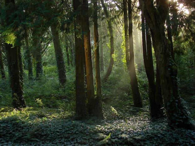 Belas paisagens do sol brilhando sobre uma floresta verde cheia de diferentes tipos de plantas Foto gratuita