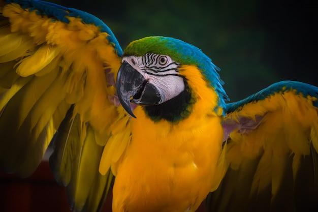 Belas penas de uma arara azul e ouro. papagaio. Foto Premium