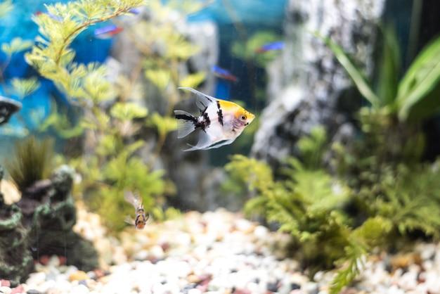 Belo aquário cheio de peixes Foto Premium