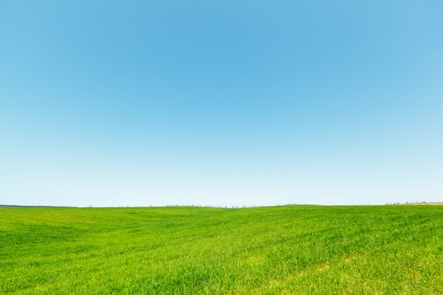 Belo campo verde Foto Premium
