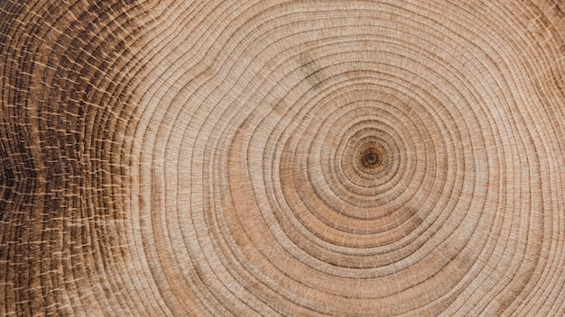 Belo conceito macro madeira Foto gratuita