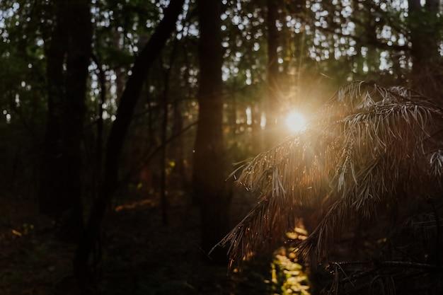 Belo nascer do sol na floresta de outono Foto Premium