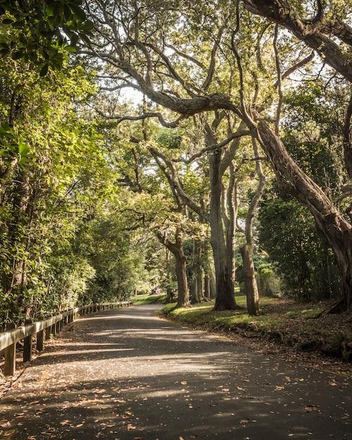 Belo parque com grandes árvores e vegetação com uma estrada cheia de curvas e folhas caídas Foto gratuita