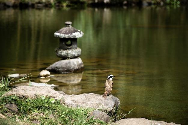 Belo pássaro à beira do lago Foto gratuita