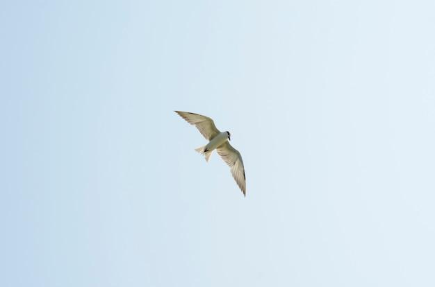 Belo pássaro no céu Foto Premium