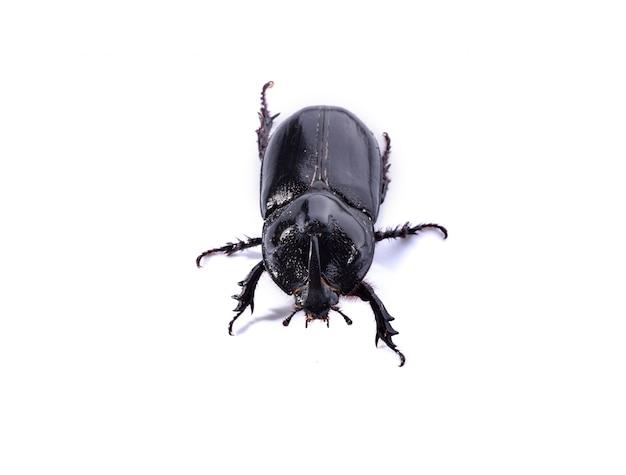Besouro preto sobre fundo branco Foto gratuita
