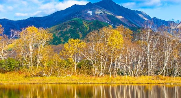 Bétulas no outono refletindo no lago Foto Premium