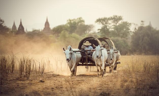 Birmanês rural homem dirigindo carrinho de madeira com feno na estrada poeirenta desenhada Foto Premium