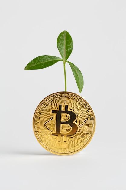 Bitcoin dourado com planta atrás dele Foto gratuita