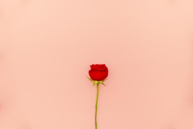 Bloco de notas espiral branco com as rosas vermelhas na luz - fundo cor-de-rosa. Foto Premium