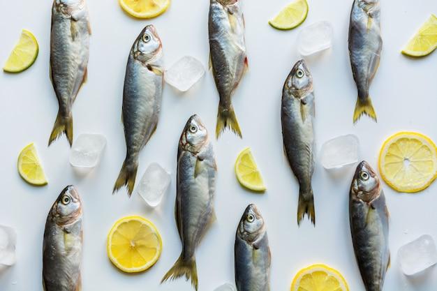 Bluefish em branco, padrão de peixe, Foto Premium