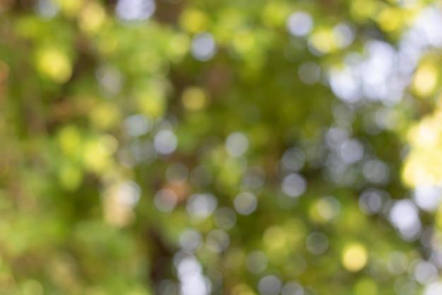 Bokeh de folhas de árvore para fundo de natureza e salvar verde Foto Premium