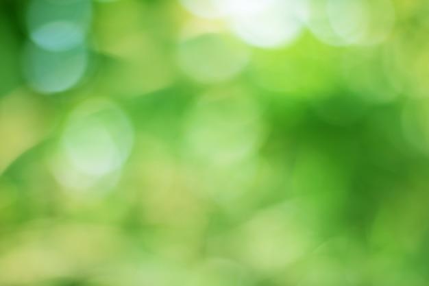 Bokeh de folhas de árvore para o fundo da natureza e salvar o conceito verde Foto Premium