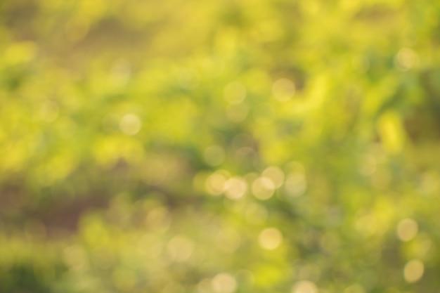 Bokeh de folhas de árvore para o fundo da natureza Foto Premium