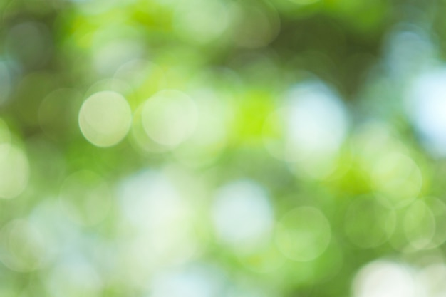Bokeh verde abstrato fora de plano de foco da árvore na natureza Foto Premium