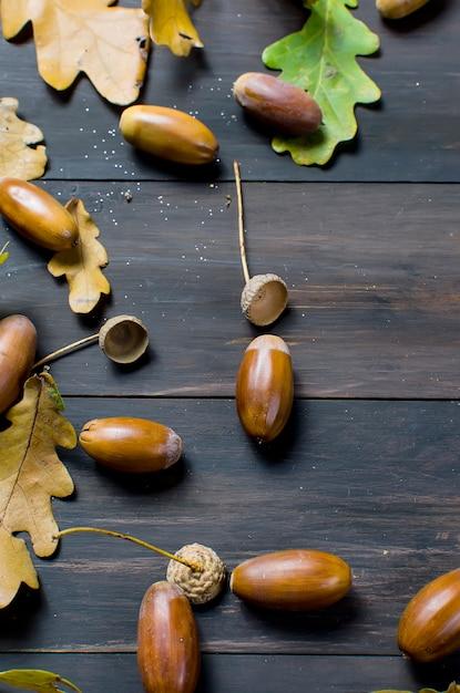 Bolotas e folhas de carvalho Foto Premium