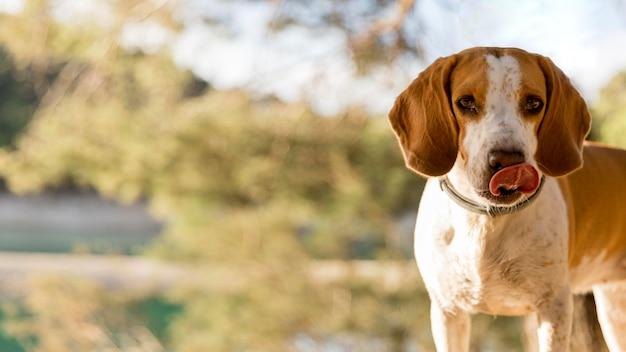 Bom menino cachorro fundo borrado da natureza Foto Premium