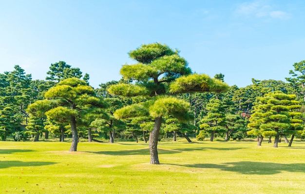 Bonsai árvore no jardim do palácio imperial na cidade de tóquio Foto Premium