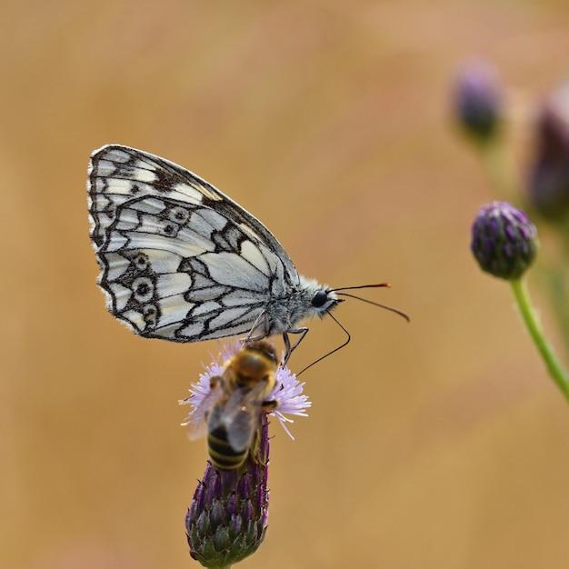 Borboleta colorida bonita que senta-se na flor na natureza. dia de verão com sol lá fora no prado. col Foto gratuita
