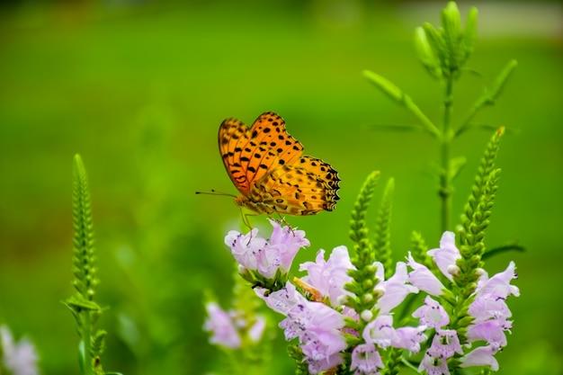 Borboleta em uma flor lilás Foto gratuita