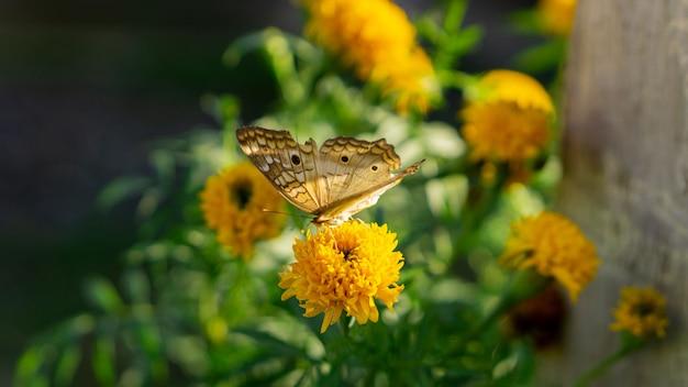Borboleta na flor amarela Foto Premium