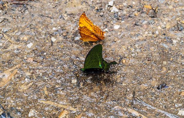 Borboletas laranja e pretas no chão de pedra Foto Premium