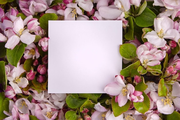 Borda de flor de primavera, cartão de papel em branco, galhos de macieira com flores rosa e brancas e quadro de folhas verdes. fundo floral, vista superior. flor da primavera Foto Premium