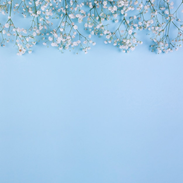 Borda superior feita com flores de respiração do bebê branco sobre fundo azul Foto gratuita