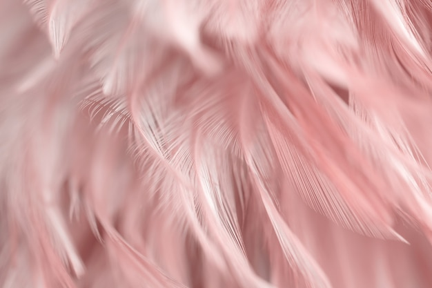 Borrão pássaro galinhas pena textura de fundo Foto Premium