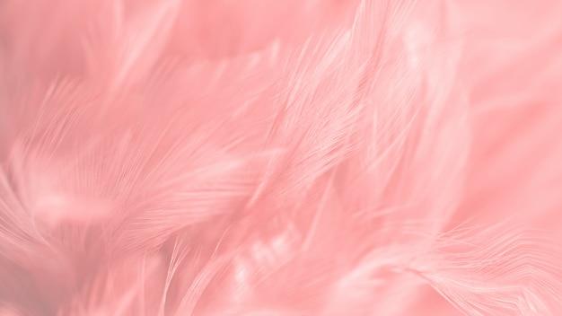 Borrão pássaro galinhas pena textura Foto Premium