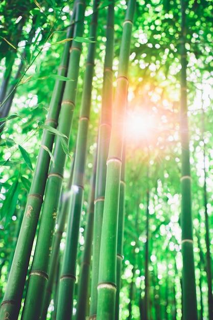 Bosque de bambu, floresta natural de bambu verde Foto Premium