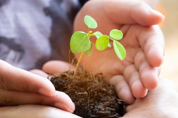 Brotar a planta e o solo segurando nas mãos. árvore crescendo e prevenir por humanos. Foto Premium