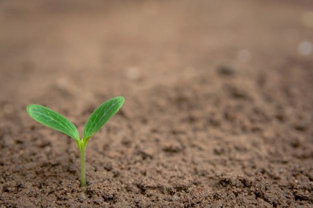 Broto verde, crescendo, de, fundo solo, com, copyspace Foto Premium