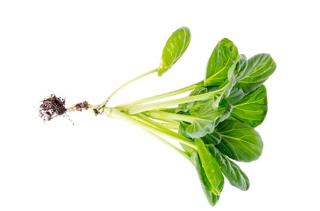 Broto verde novo, repolho com raiz, isolado no branco. Foto Premium