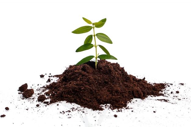 Broto verde pequeno no solo Foto Premium