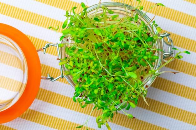 Brotos de alfafa frescos e crus germinados. dieta saudável e saudável. fechar-se. Foto Premium