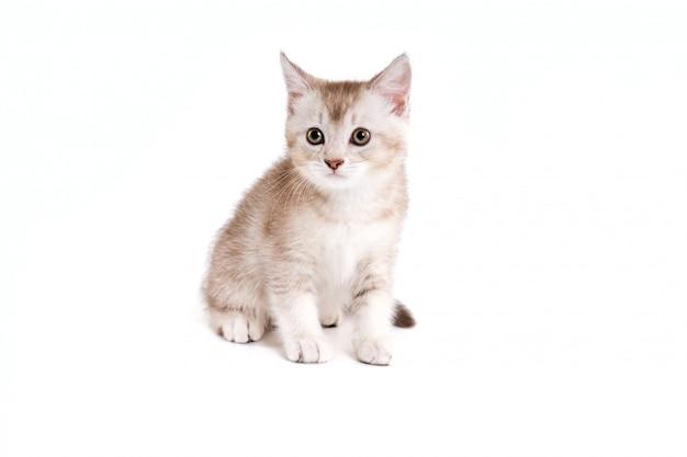 Brown e gatinho branco isolados no branco. Foto Premium