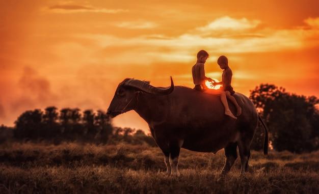 Búfalo de água feliz da equitação do menino. Foto Premium