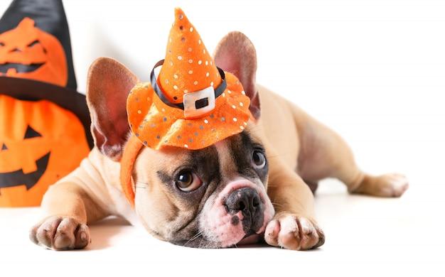 Buldogue francês bonito com chapéu halloween isolado Foto Premium