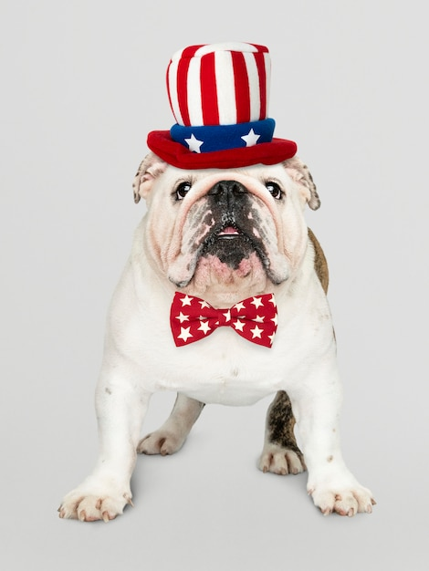 Bulldog inglês dos eua Foto gratuita