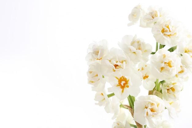 Buquê de flores isolado com copyspace Foto gratuita
