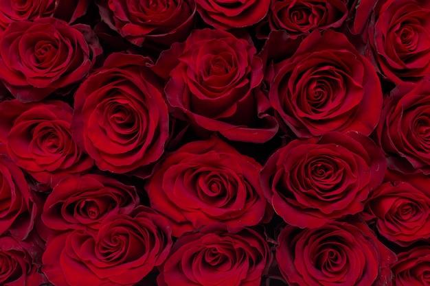 Buquê de flores: rosas vermelhas frescas Foto Premium