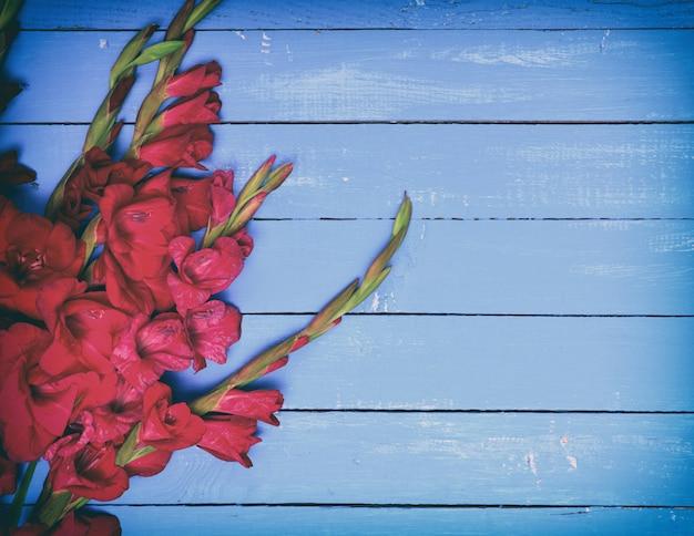 Buquê de gladíolo vermelho sobre um fundo azul de madeira Foto Premium