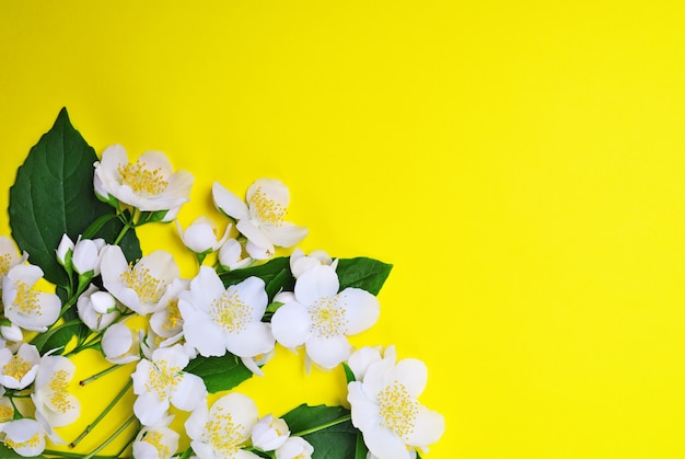 Buquê de jasmim florescendo com flores brancas Foto Premium