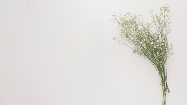 Buquê de ramos de plantas verdes finas com flores Foto gratuita
